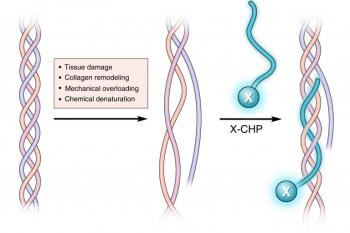 link to library blog - Collagen Hybridizing Peptides