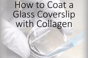 link to library blog - Coating a Glass Coverslip with Collagen