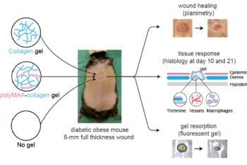 link to library blog - Collagen Hydrogel for Diabetic Wounds